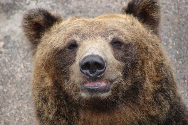 ブッシュクラフトに迫る危険 クマ